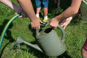 edible classroom watering 1