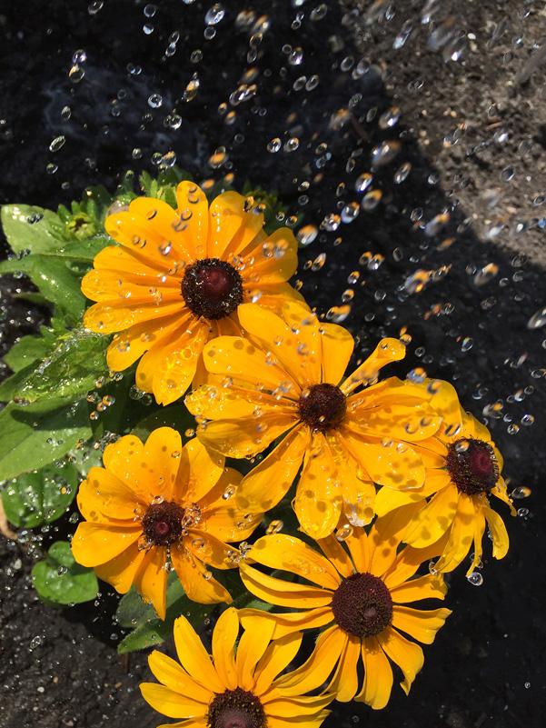whatwegrow-flowers