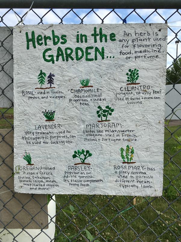 whatwegrow-herbs