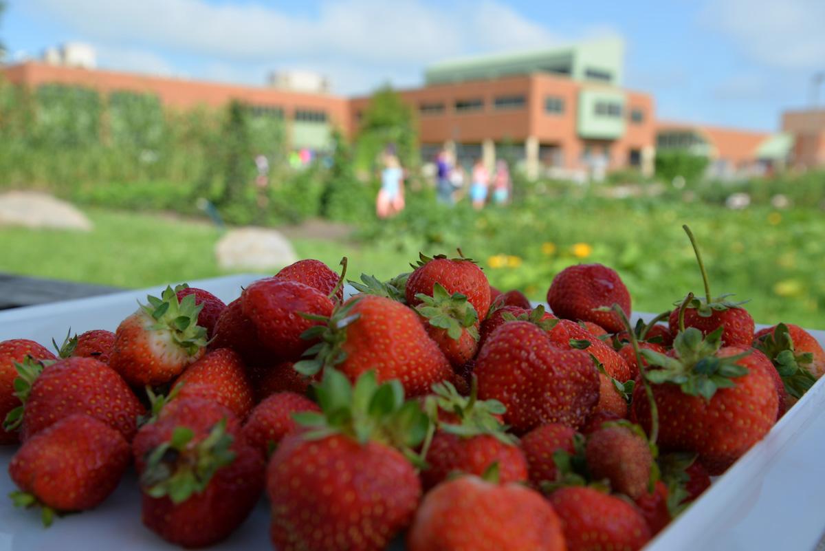 whatwegrow-strawberries2