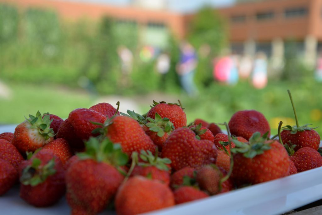whatwegrow-strawberries3