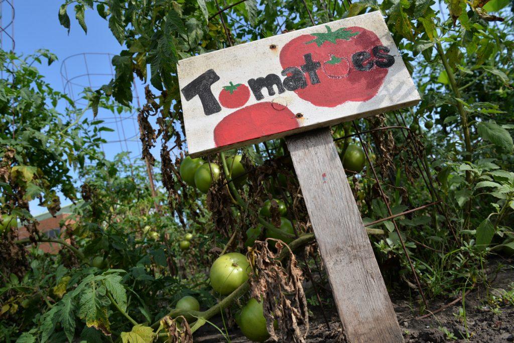 whatwegrow-tomatoes