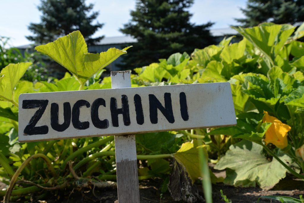 whatwegrow-zucchini